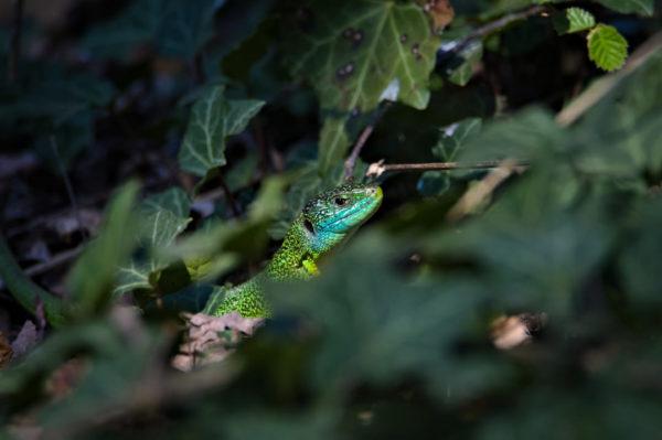 atelier photo reptiles